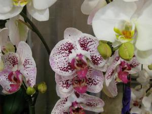 orchids sold at Whole Foods