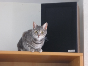 artemis on the bookshelf