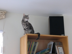 artemis on bookshelf