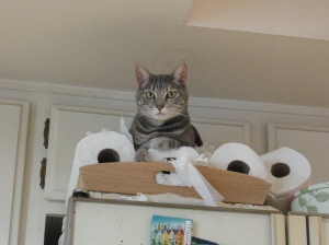 Artemis on top of fridge