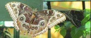 Las Vegas: butterfly