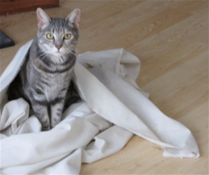 Artemis playing in a sheet