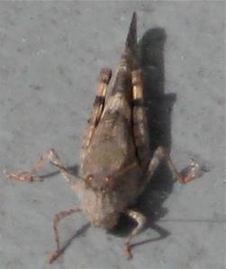 Locust in Las Vegas