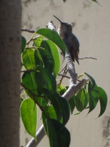a hummingbird through window