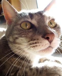 Artemis cat face sunlight