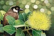 po'ouli bird in tree