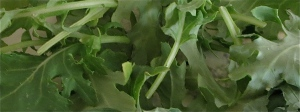 kale for kale platter
