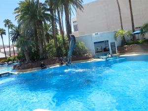dolphins at las vegas mirage dolphin habitat
