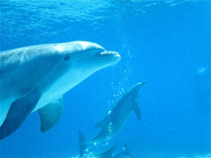dolphins at Mirage Las Vegas dolphin habitat