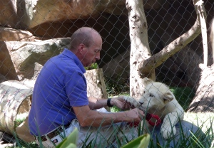 Mirage secret garden las vegas white lion cub