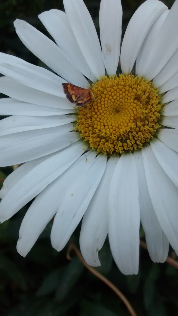 flower with moth in McMinnville Oregon