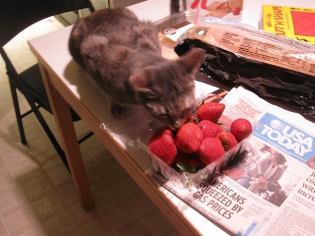 Artemis cat with strawberries